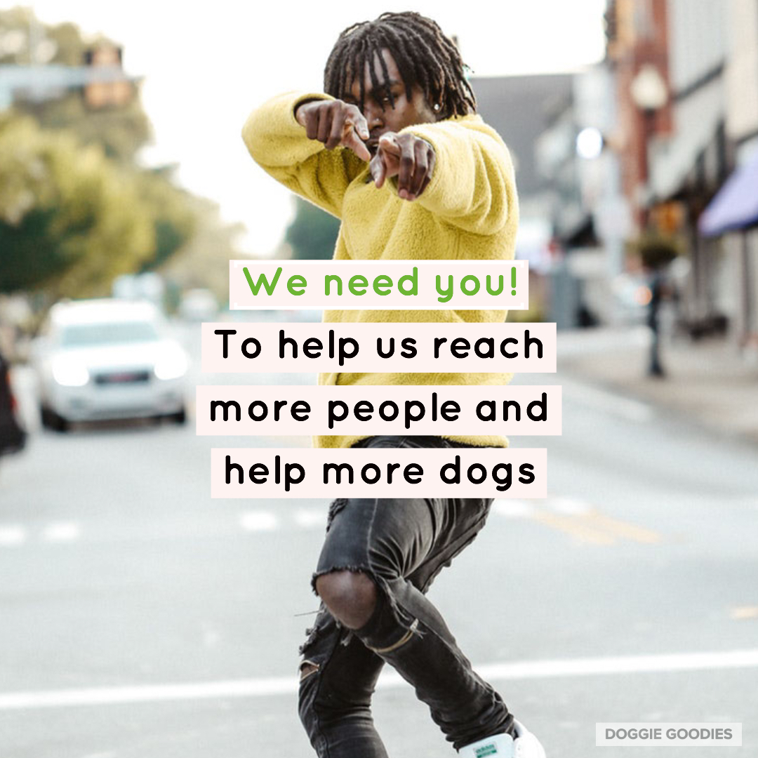 dogs-in-need, we-need-you